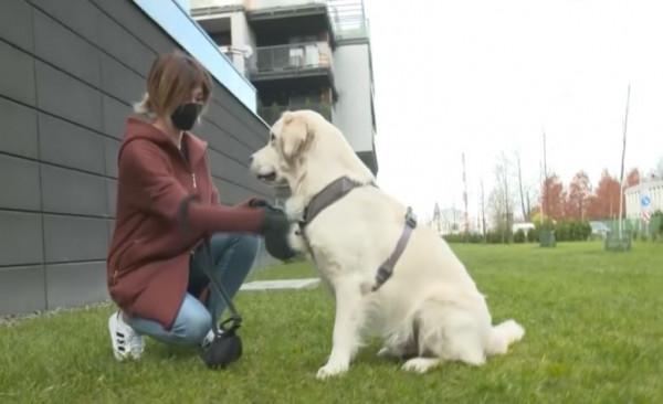Доброволци разхождат кучета на стопани под карантина