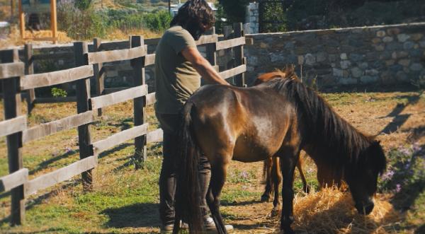 На остров Скирос спасиха порода коне на 2000 години