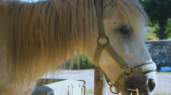 Уникална порода коне привлича туристи на остров Скирос