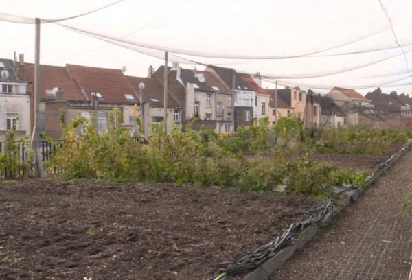 Градско земеделие - как покривите на сгради стават биоградини за плодове и зеленчуци