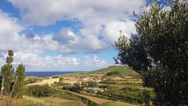 Как европейските проекти спасиха лозята на остров Гозо